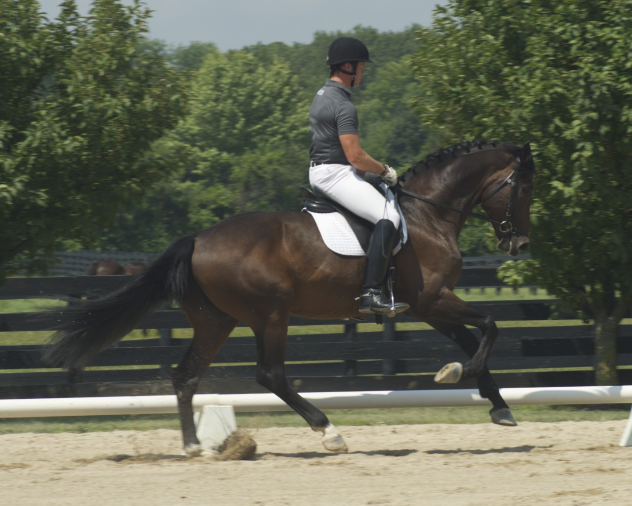 Raisin Money, owned by Bart Collida & Michelle Inman,andMartin Kuhn won the Training Level & First Level high points.