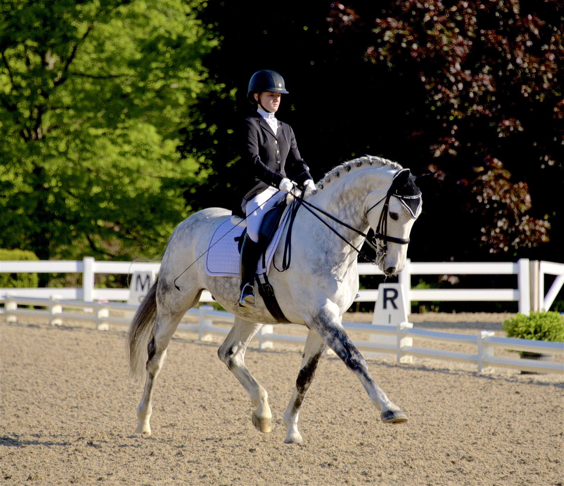 CLD member Jenna Upchurch is, as of time of publication, the top-ranked Junior rider in the country on Greystoke.