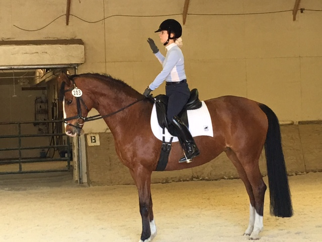 Claudia Nissley & Cinnamon at the 2016 CLD IceBreaker Schooling Show (photo by Judy Nordstrom)