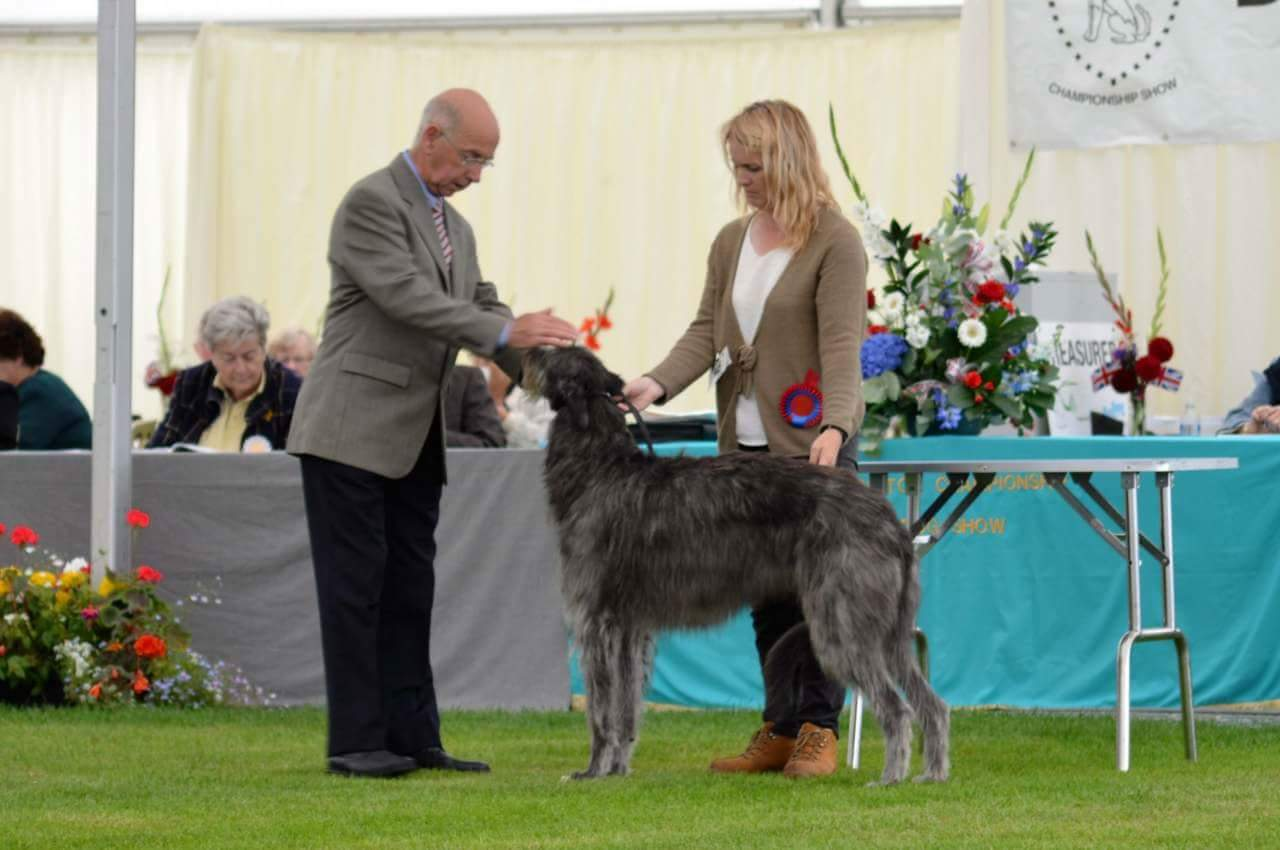 Thanks to Mark Cannon for this photo of Gobi competing in the Hound group