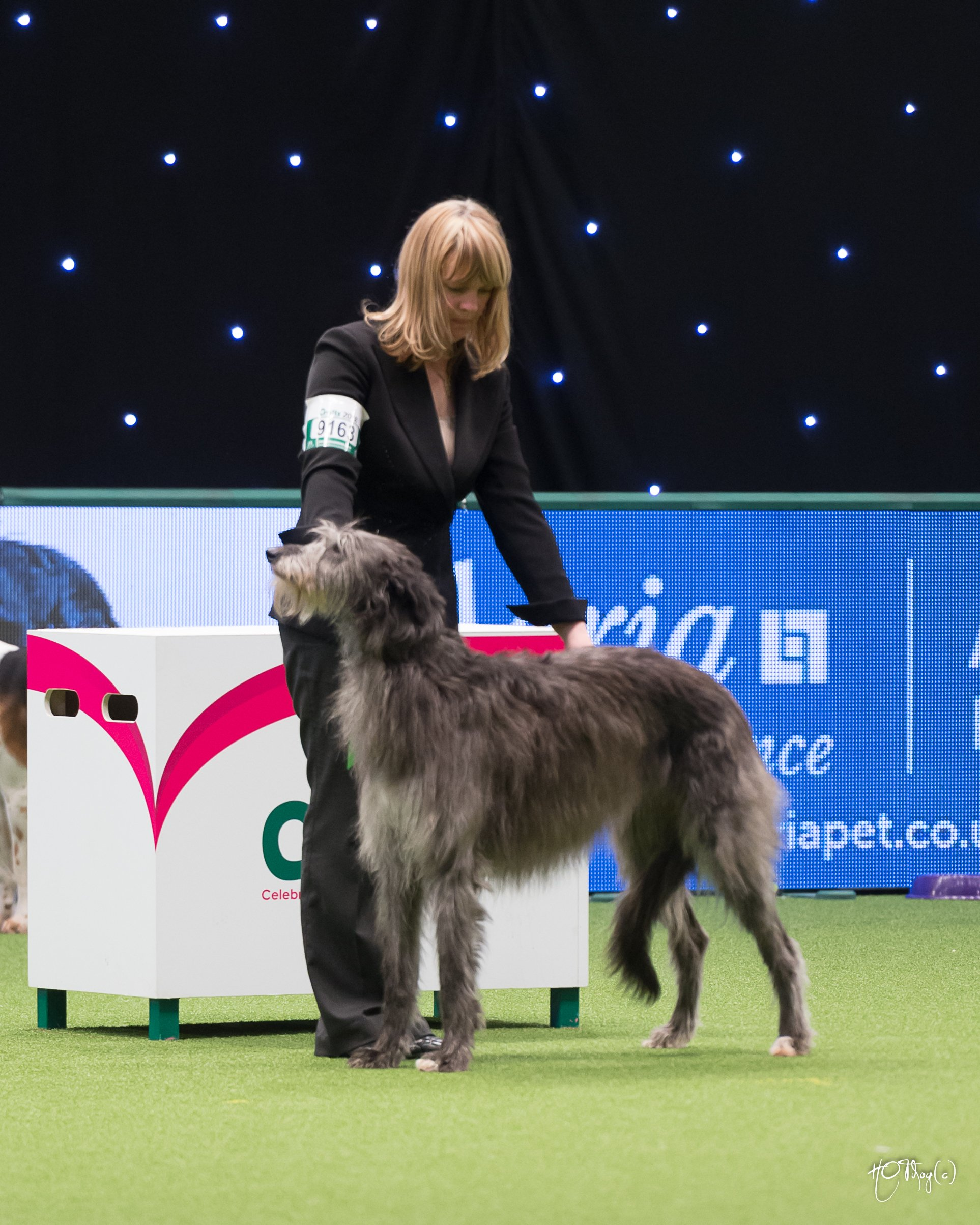 Thanks to Oleg Bochkov for the photo of Gobi competing in the hound group