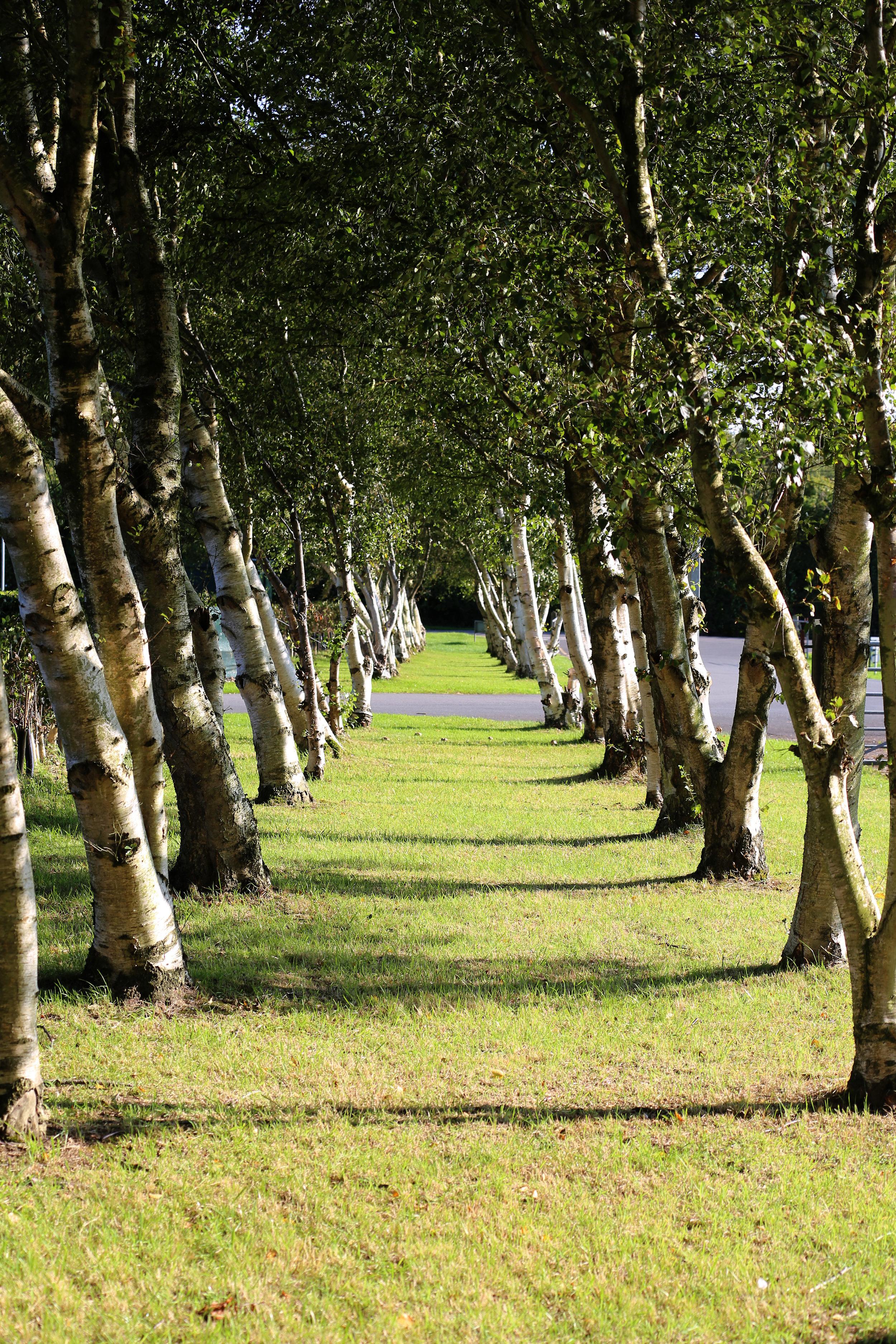 9 - Tree Line Drive.JPG