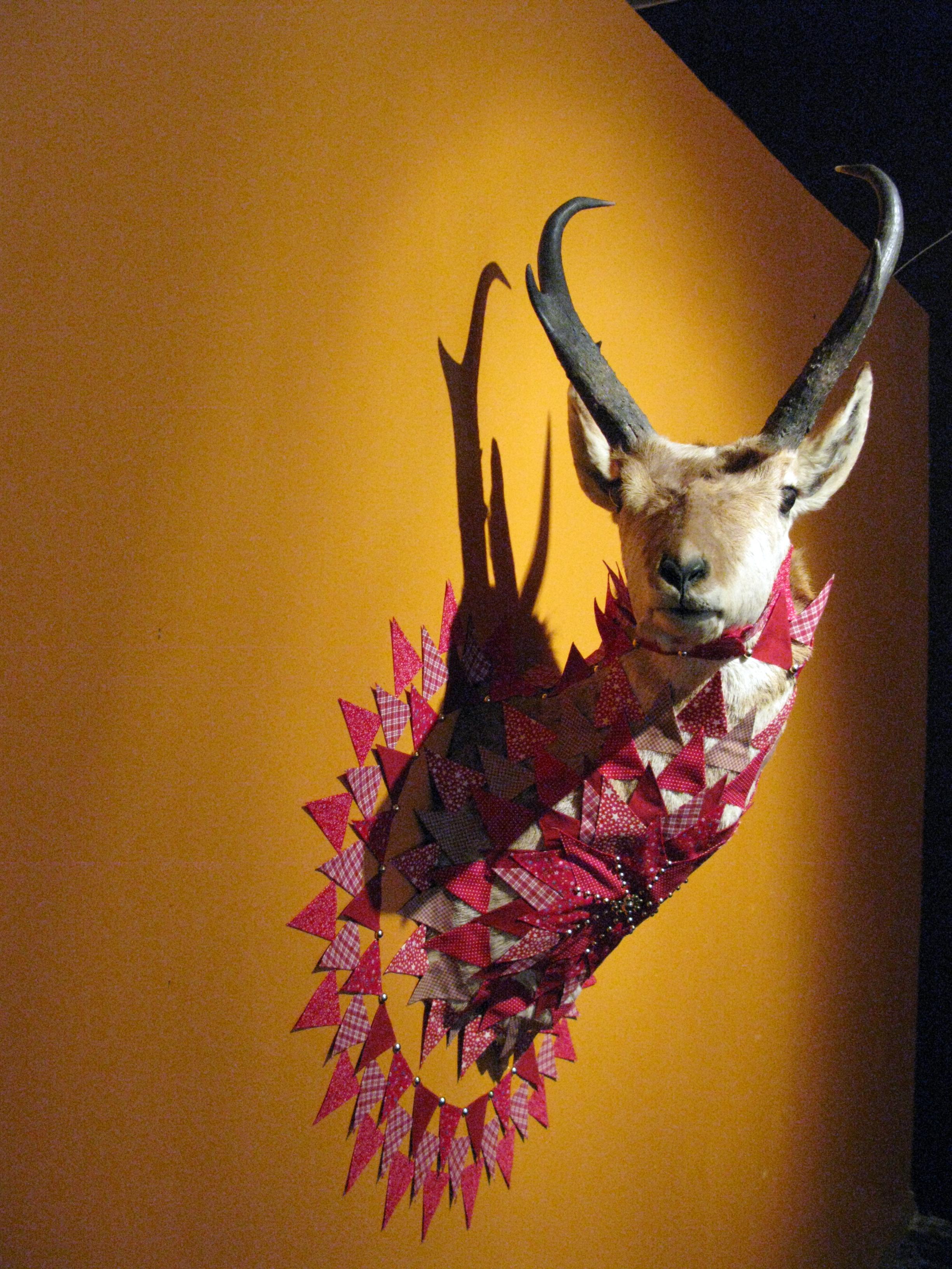 Antelope2.JPG