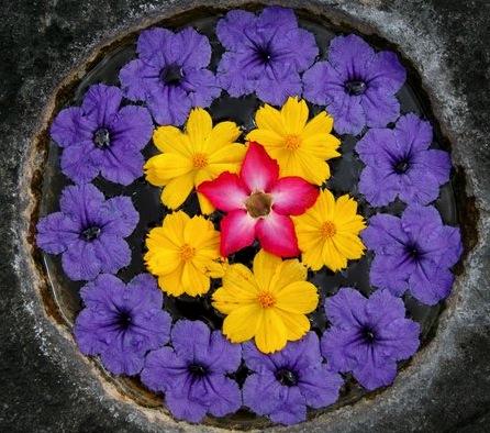 Flowers _Bali.jpg