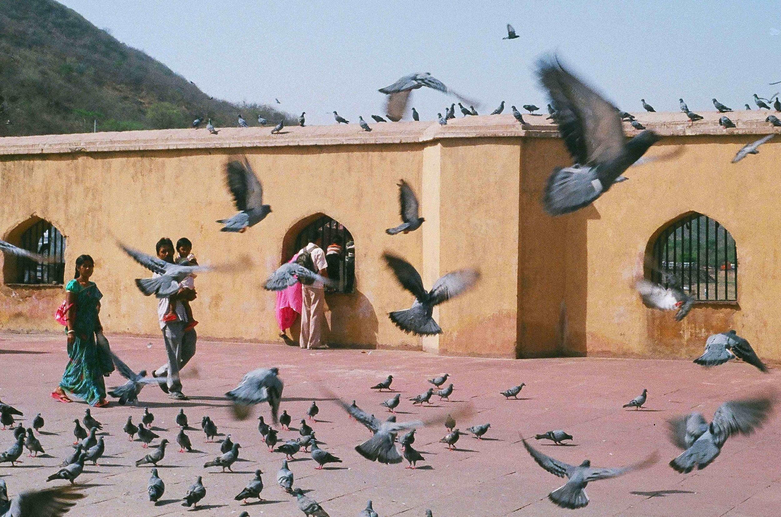 birds11.5x17.375.jpg