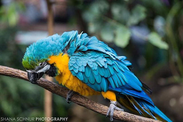 Had fun at the @centralparkzoo! I met all sorts of animals.  #onlyinnyc #centralparkzoo #wildlifeconcervationsociety #wcs #cpzoo #newyork #maccaw #birds #Manhattan #photographer #animals