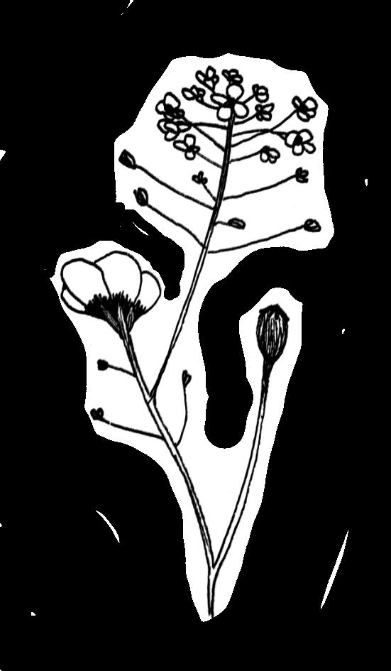 Website Flower Berry.png