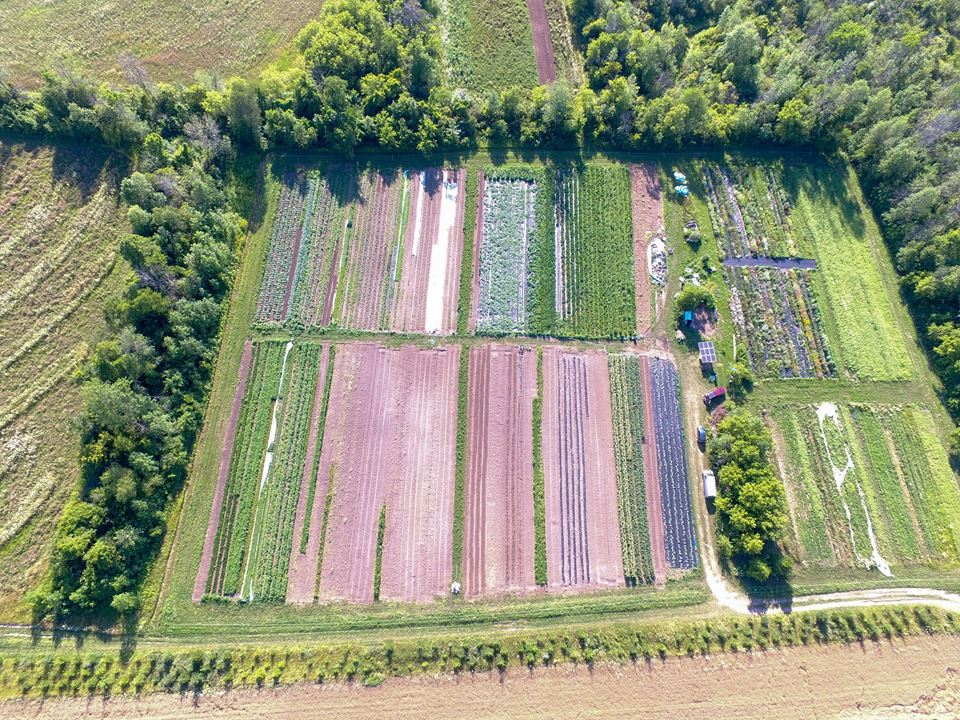 This patchwork quilt is our vegetable field!