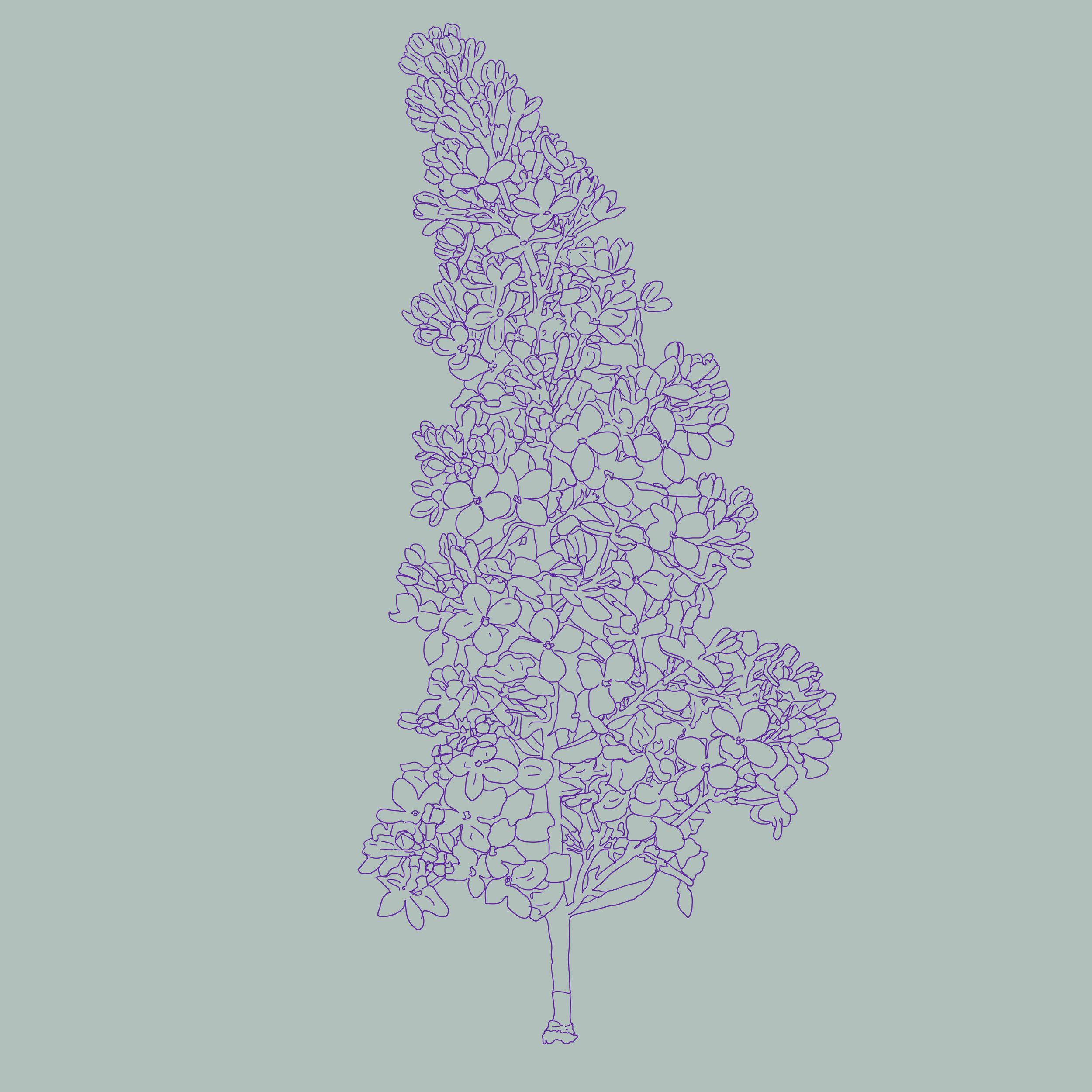 28_Flowers-B.jpg