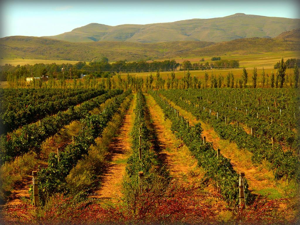 Argentina-Wine-Malbec-Vineyard.jpg