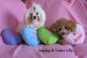 Sunday_ Tinker Lilly.jpg