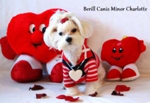 Berill Canis Minor Charlotte.jpg