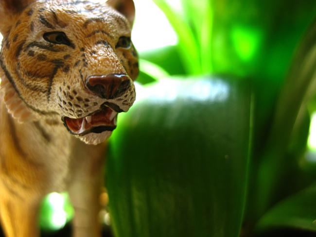 Hungry Tiger_9279169578_l.jpg