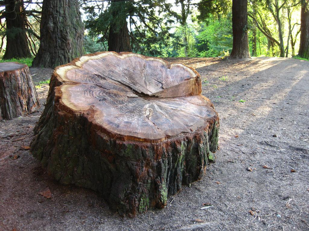 Pier Park Sequoia_9533655928_l.jpg
