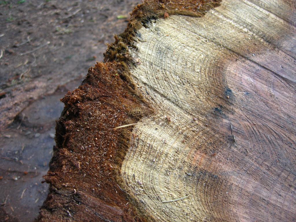 Pier Park Sequoia_9533658364_l.jpg
