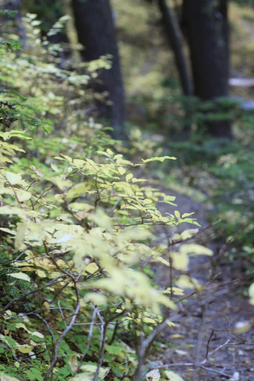 Huckleberry Path