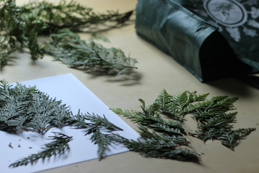 cedar-clippings