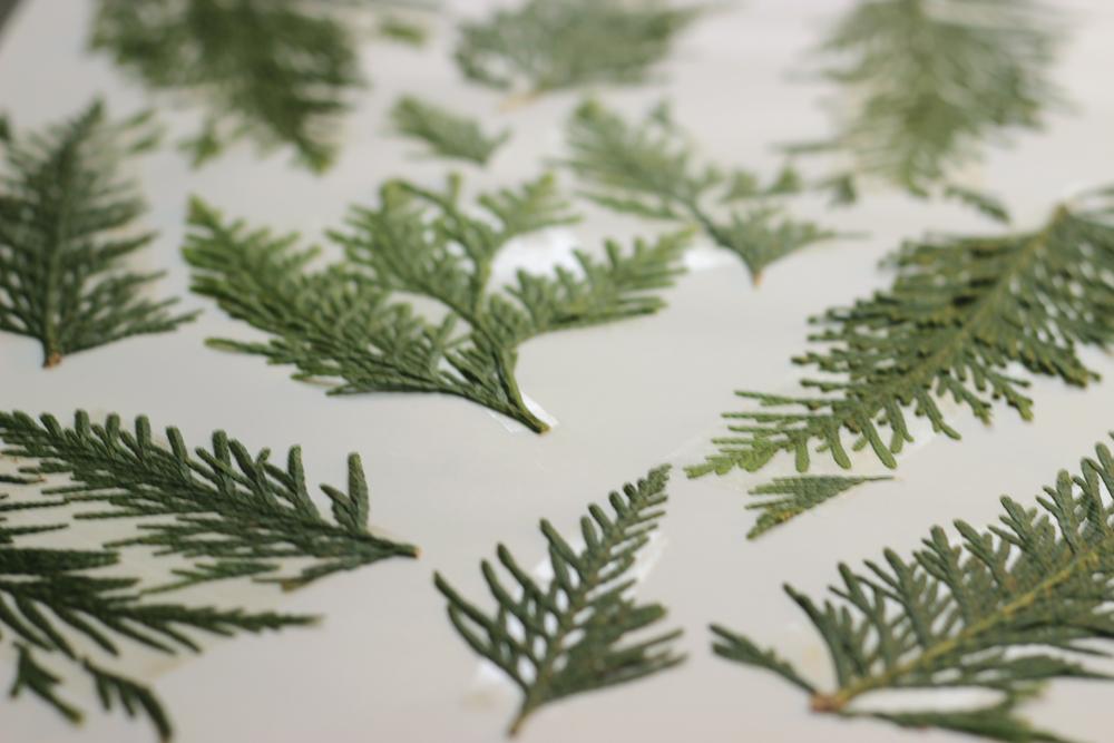cedar-printing-plate