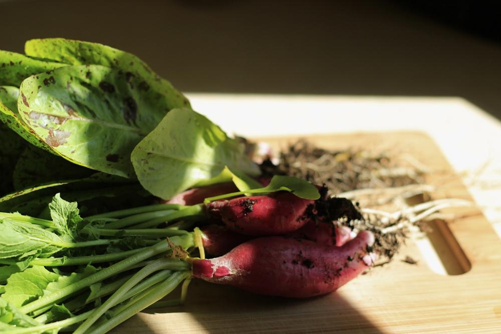 garden-produce