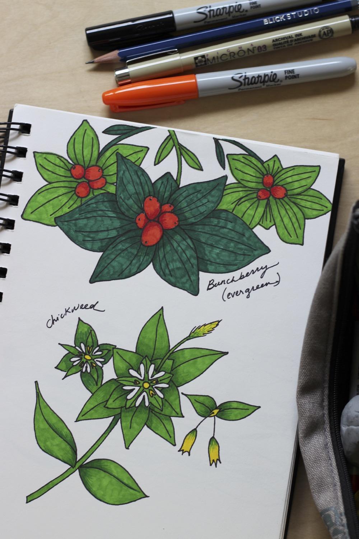 edible-plant-studies