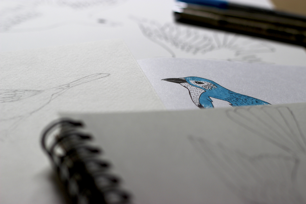 blue-jay-drawing