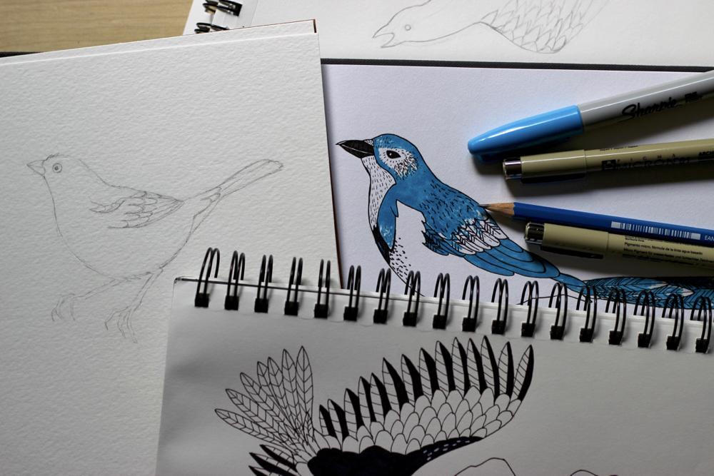 bird-sketches