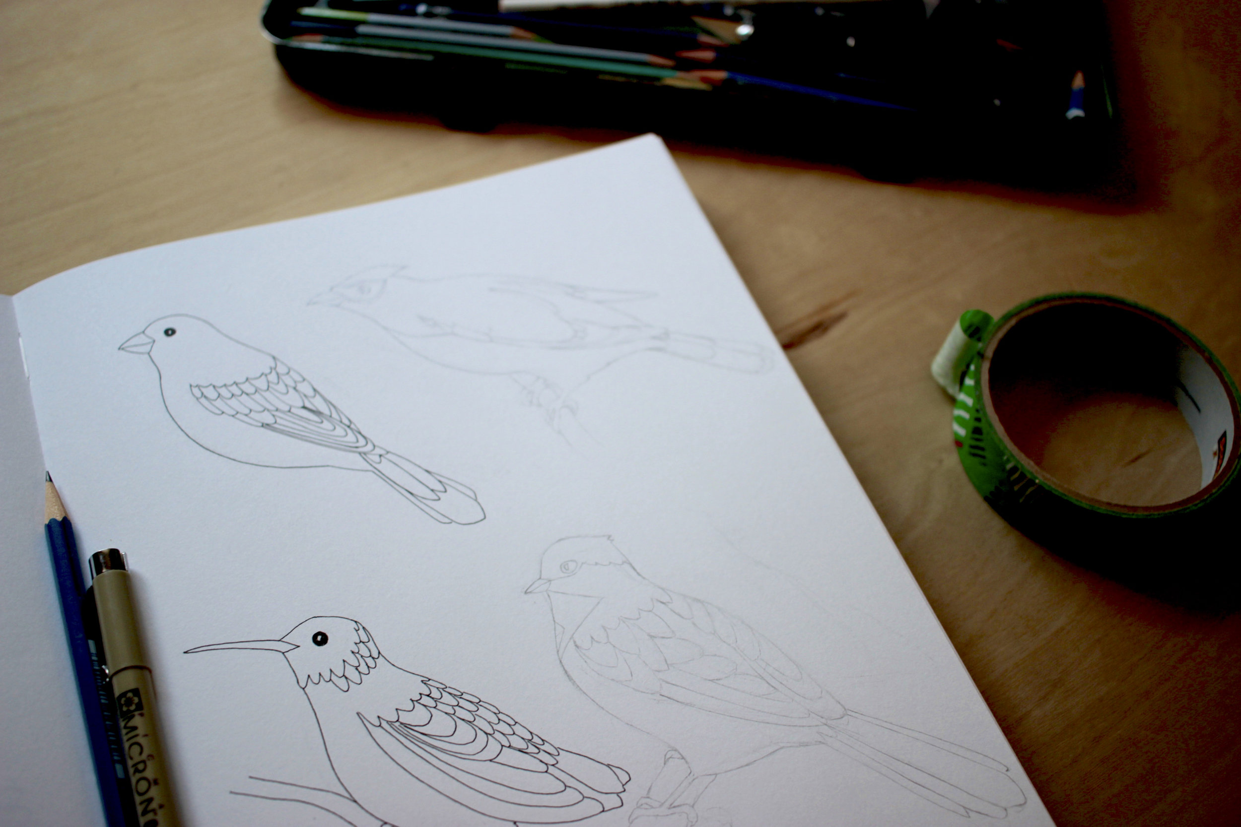 sketchbook of bird drawings