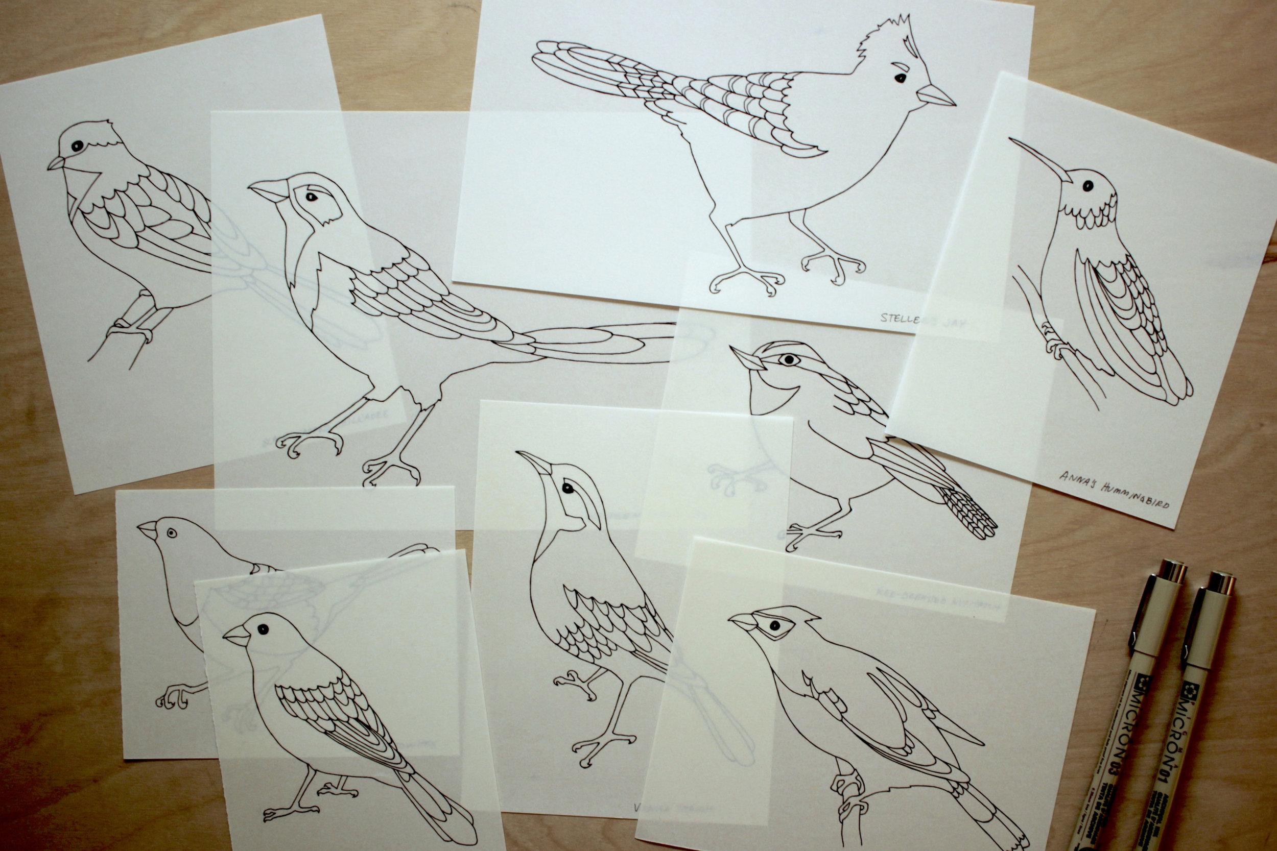 bird illustrations on vellum
