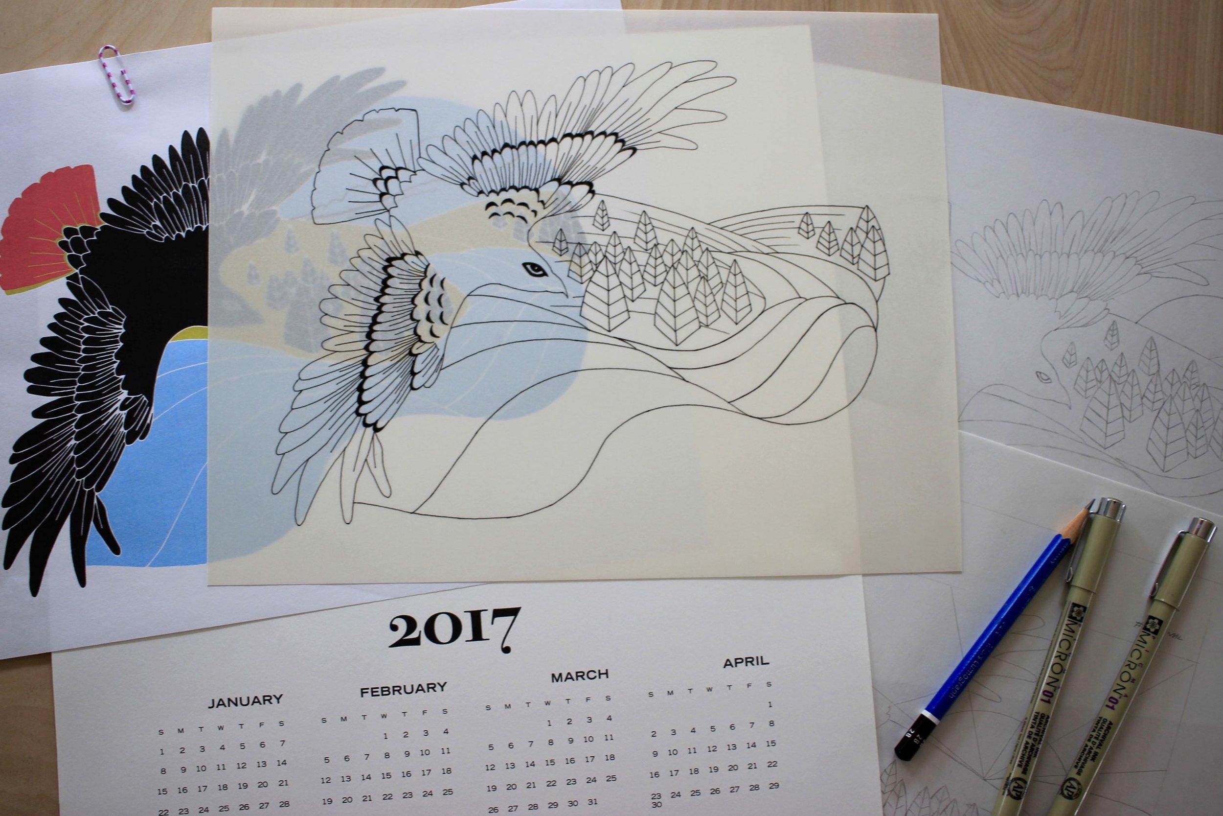 Sketches for my 2017 hawk calendar
