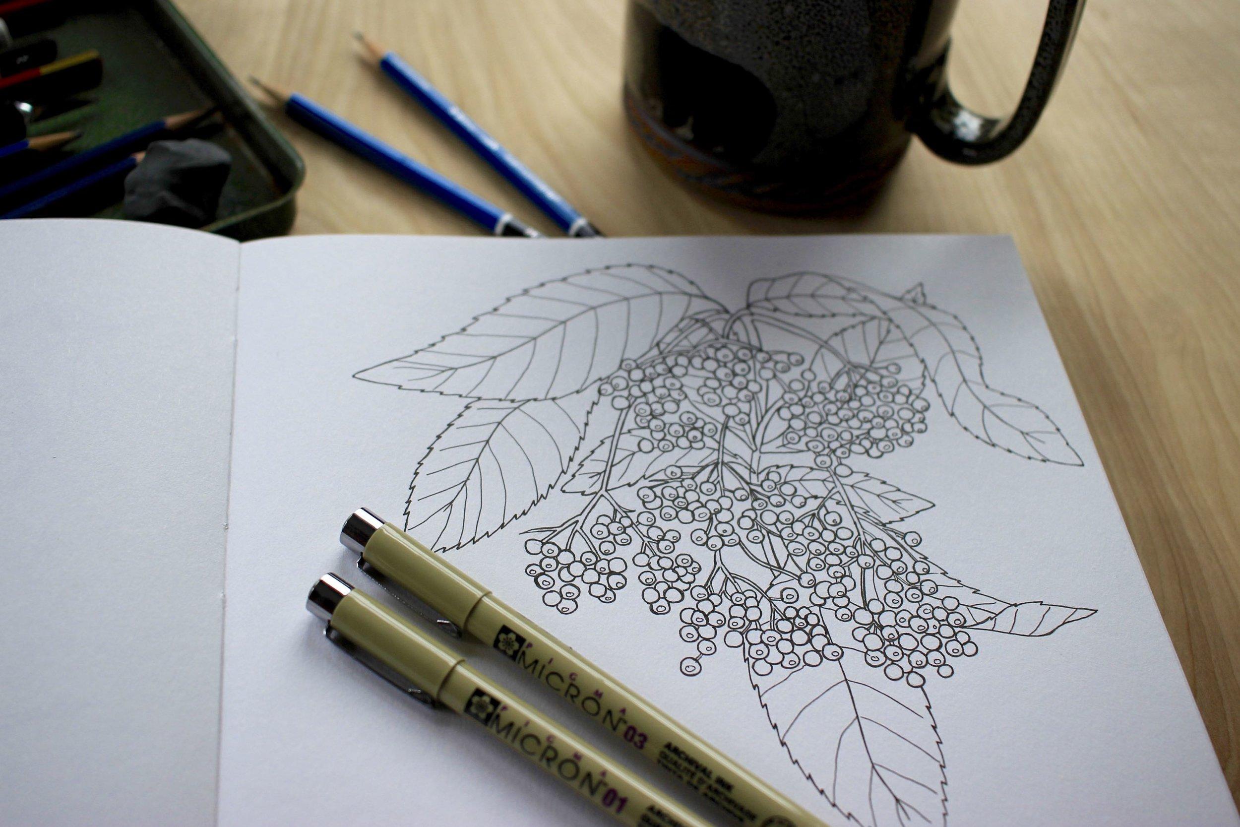 Elderberry drawing in my sketchbook
