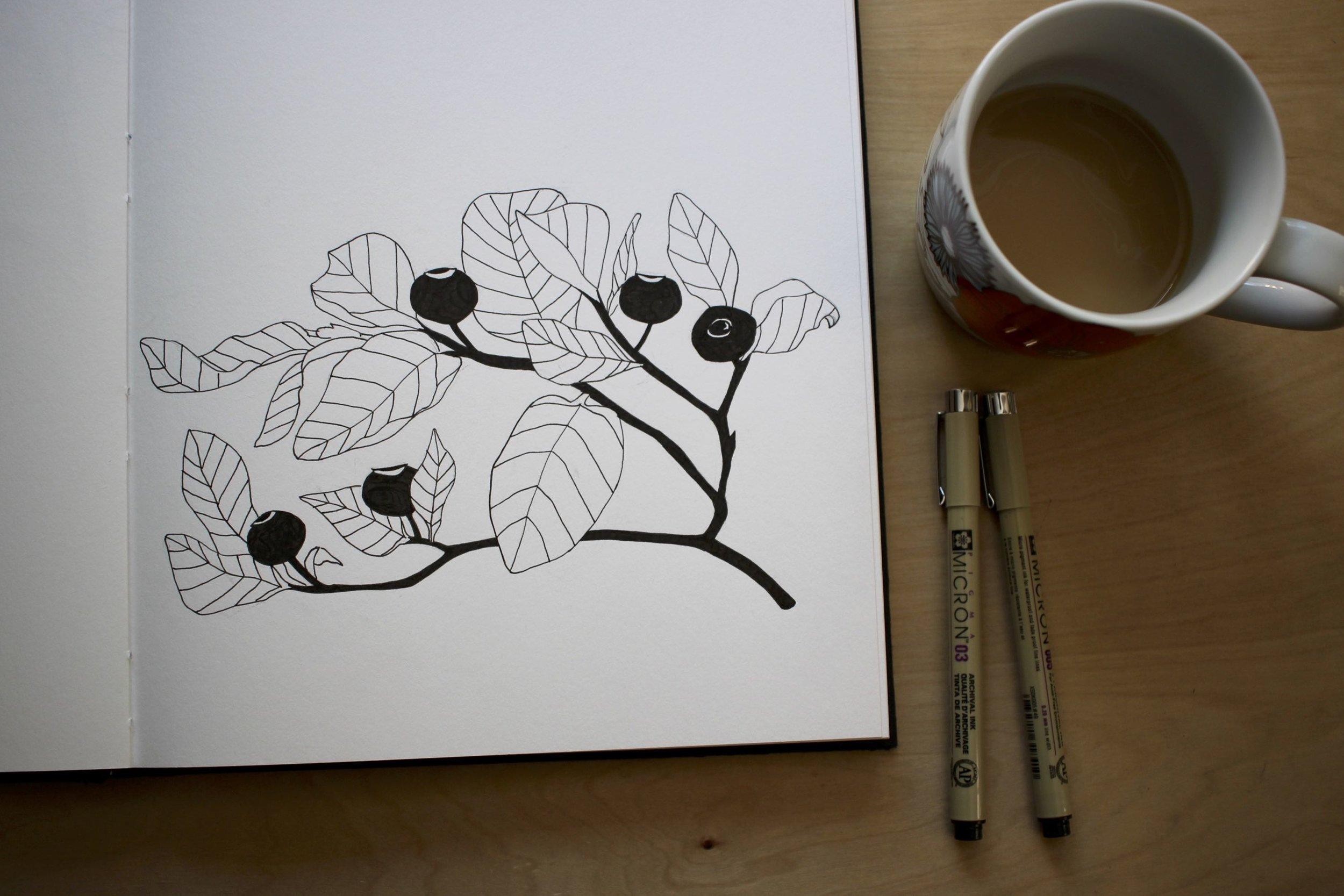 Sketchbook with huckleberry sketch