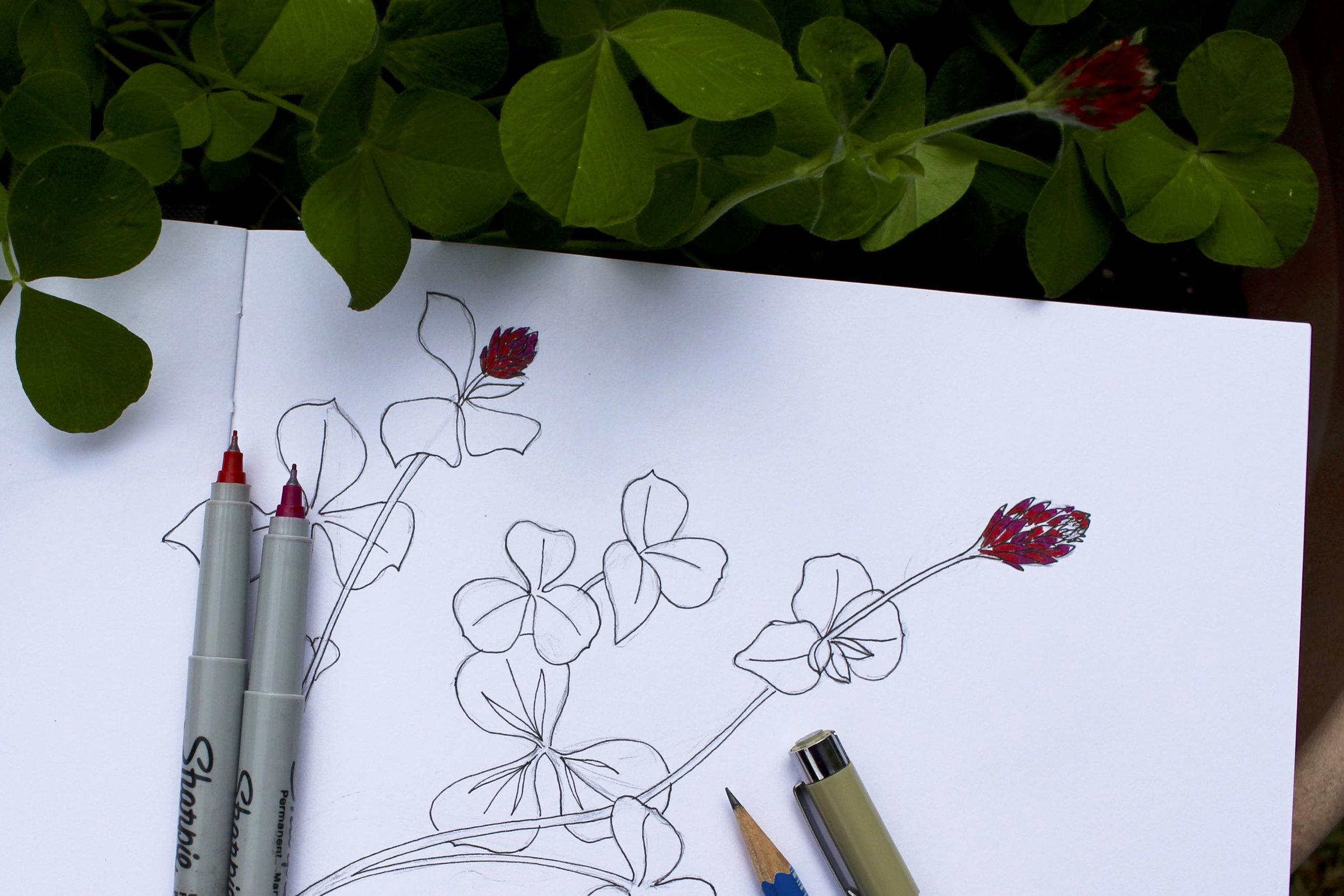 Sketchbook with clover sketch