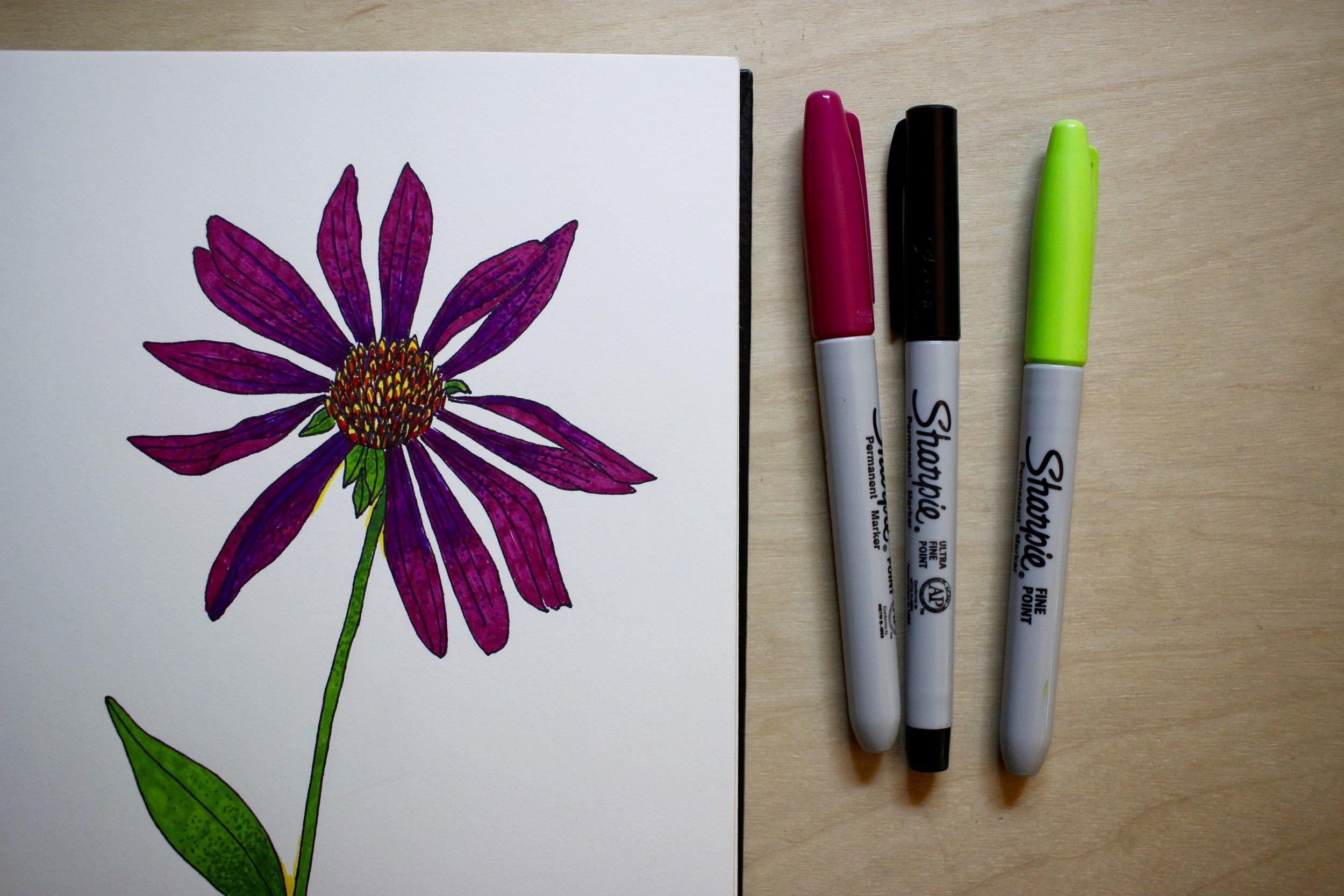 Echinacea drawing in my sketchbook