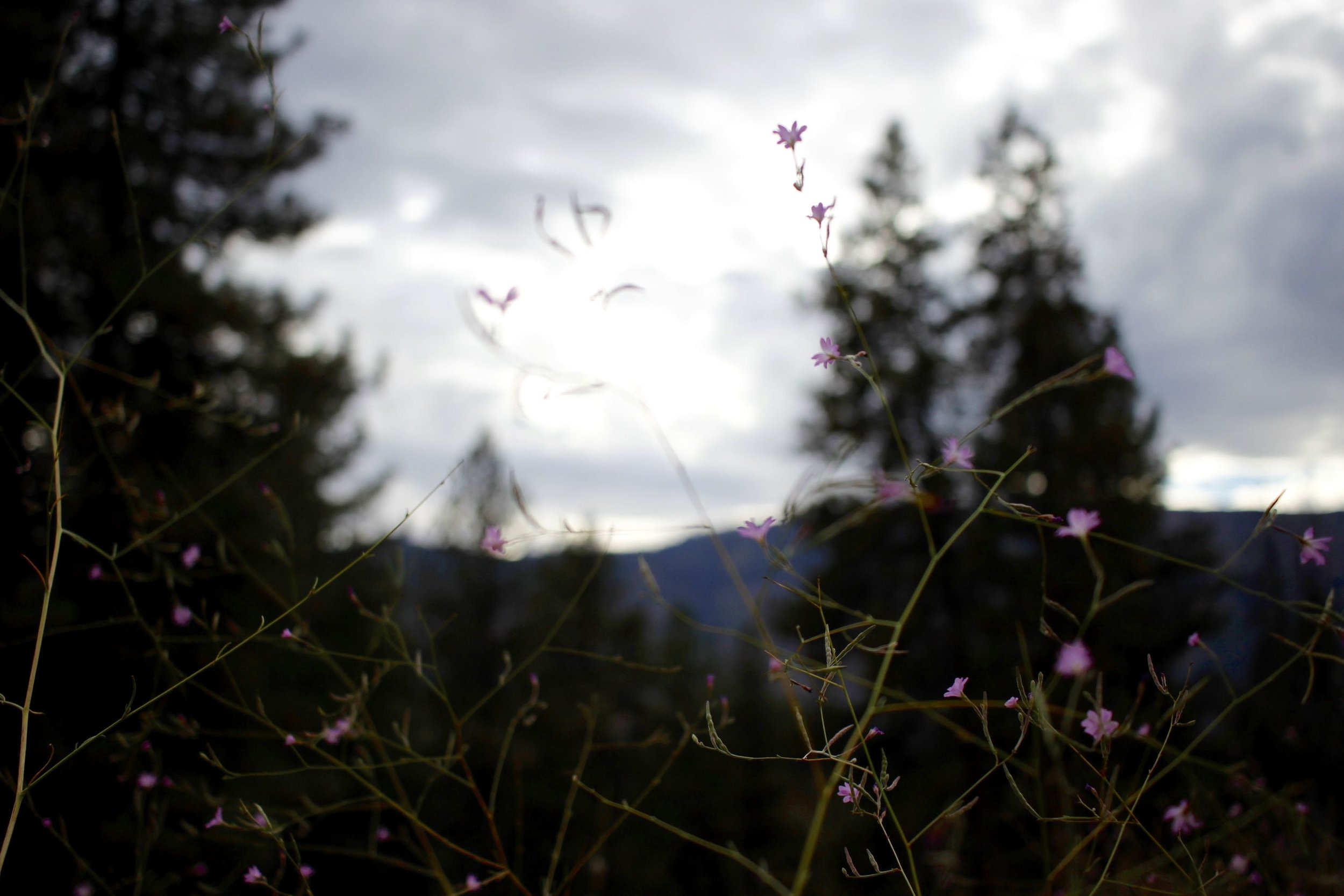 The last of the mountain wildflowers