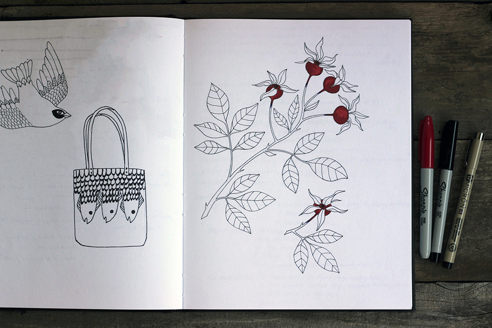 rose hips drawing in sketchbook