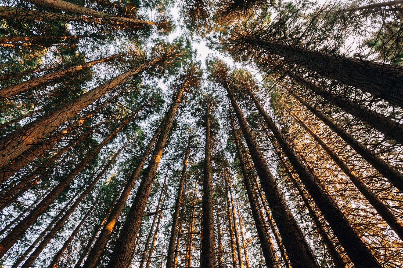 redwood park surrey trees