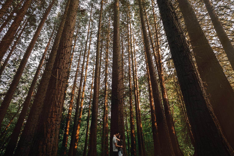 redwood park surrey engagement photography jack and elaine