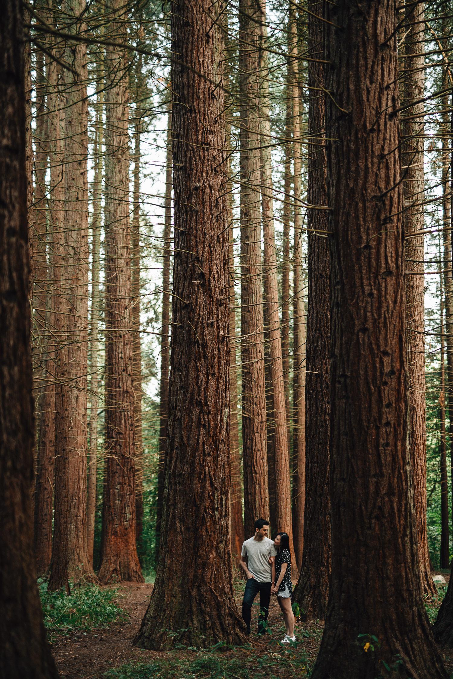 redwood park surrey engagement photography