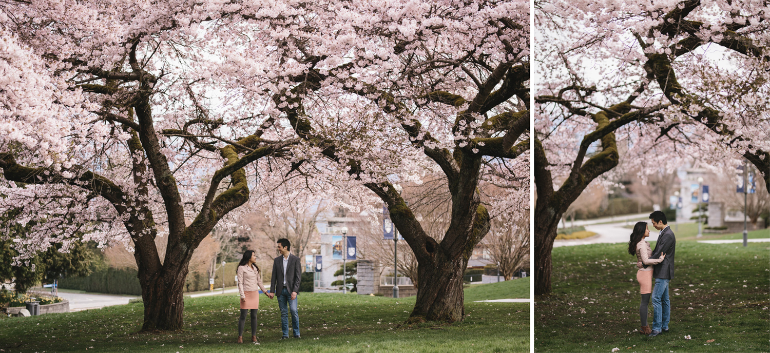 vancouver cherry blossoms engagement photography at UBC