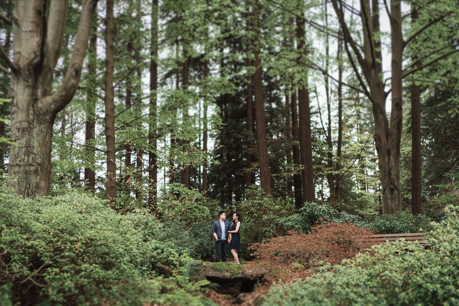 stanley park engagement photography in vancouver bc in spring with cherry blossoms