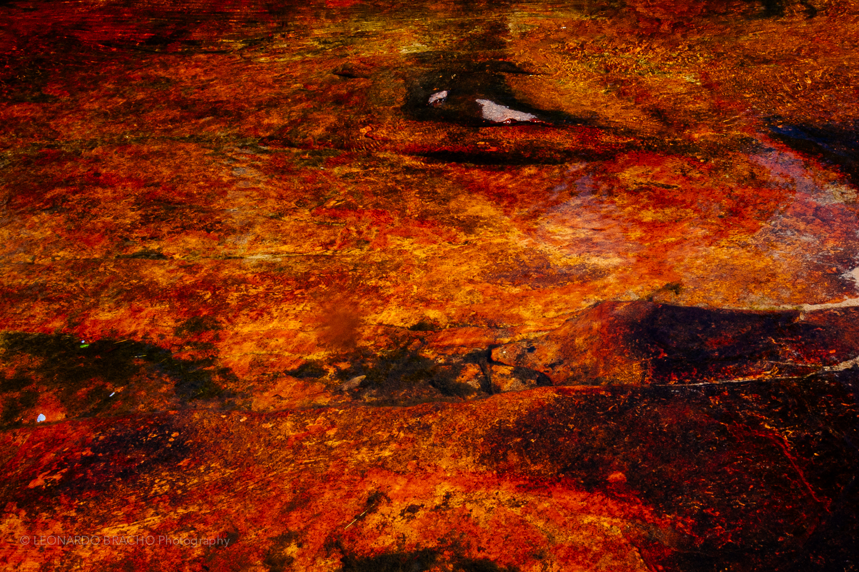 2009-12-2945_LeonardoBracho.jpg