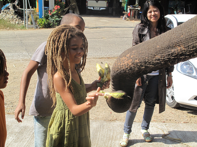 YaYa elephant.jpg
