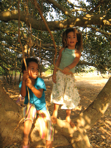 40 In the banyan tree.jpg