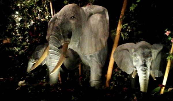 elephants at the rainforest cafe