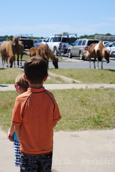 The children were in awe! They'd never seen horses so close, outside of a small petting zoo.