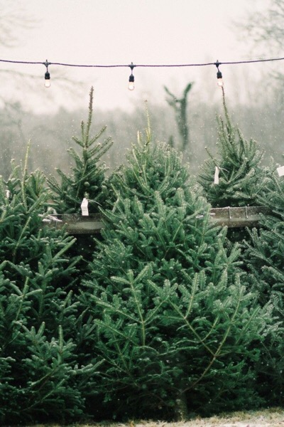 Who doesn't love the smell of a freshly cut tree? (Image credit: Justina Bilodeau)