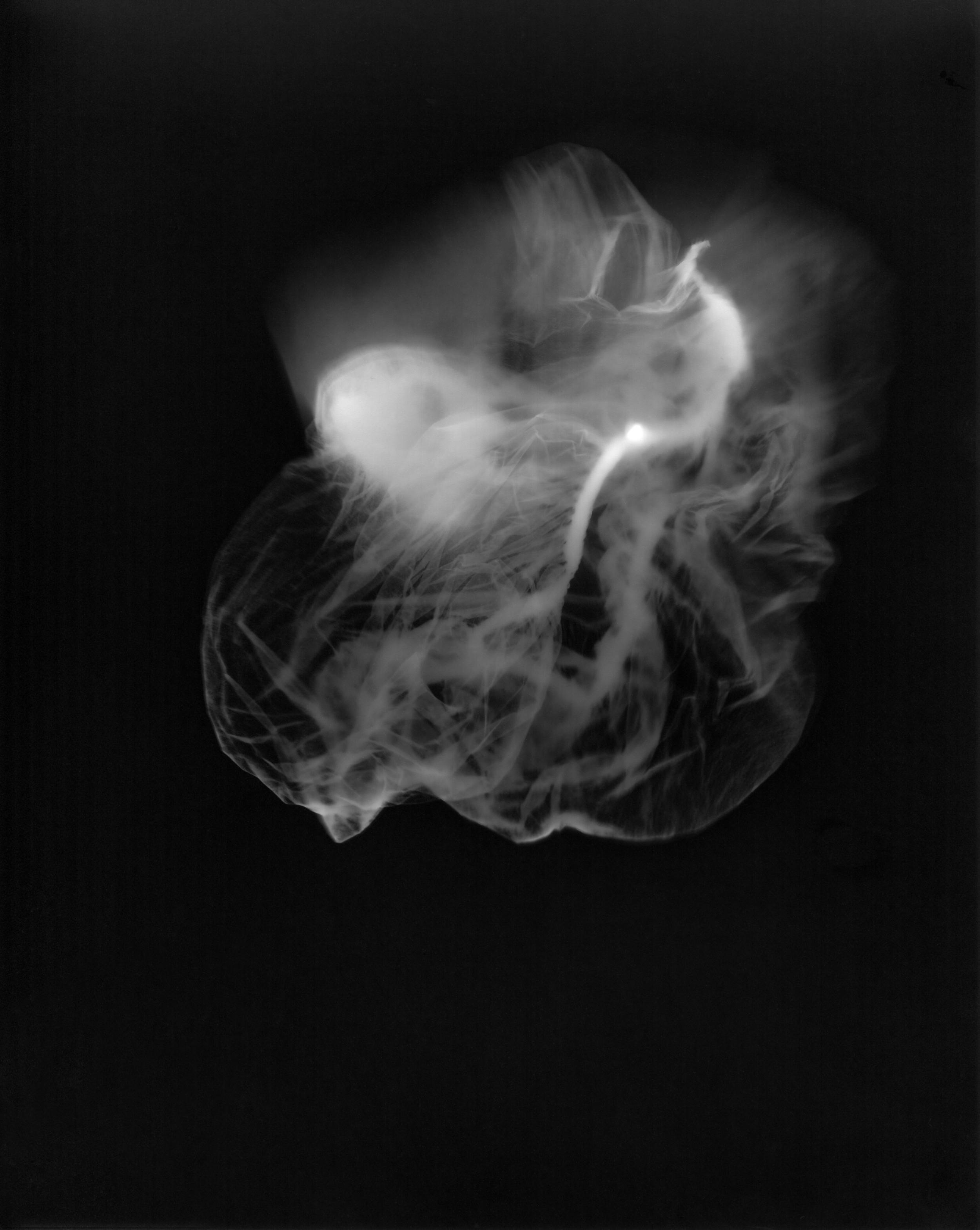 'Womb'  photogram 42 x 29 cm