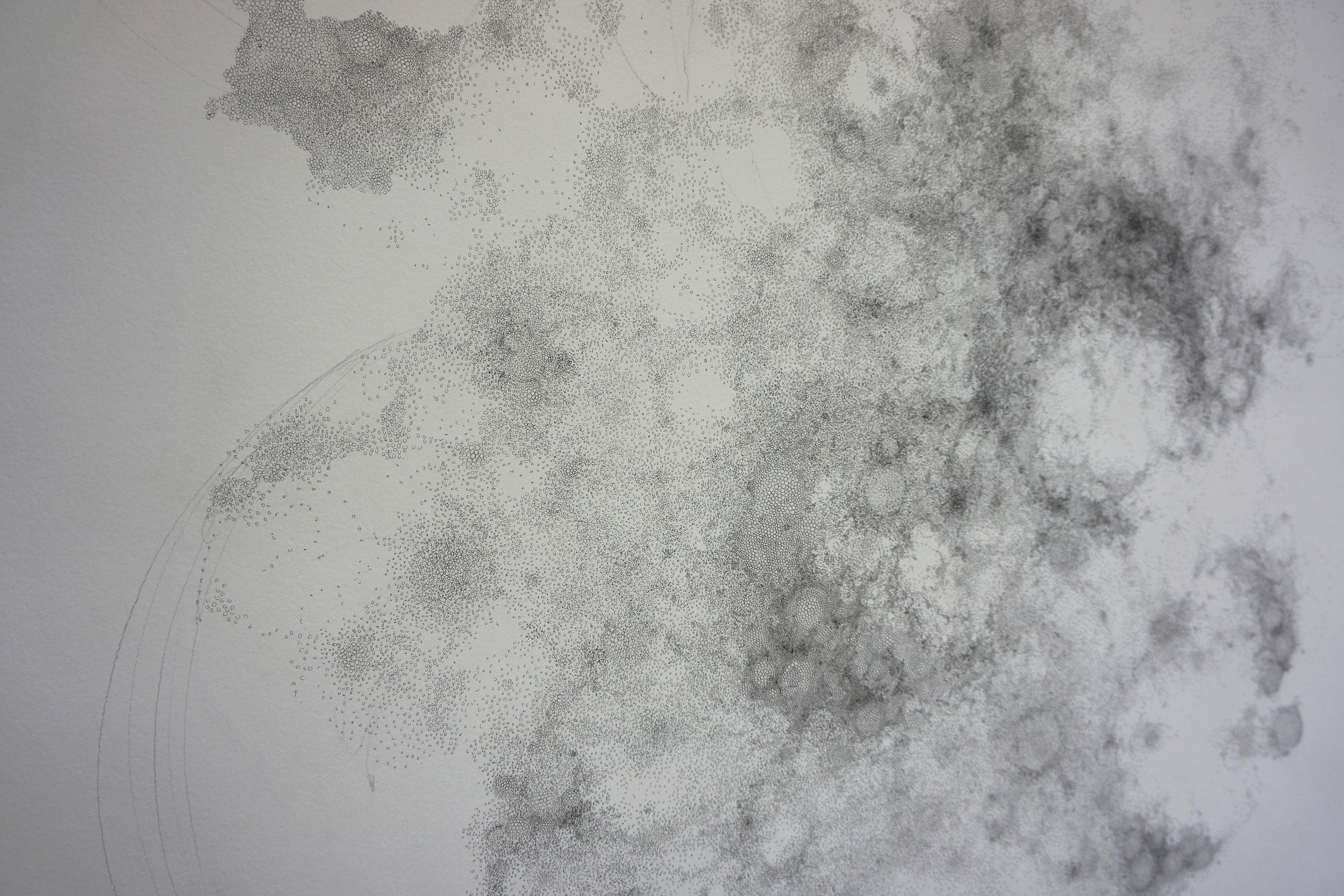 scotomo detail 3.jpg