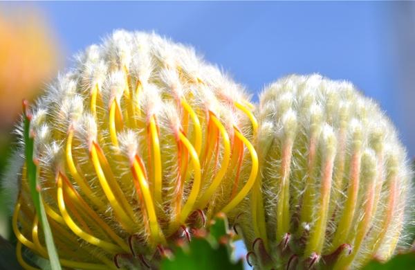 flower planets-webversion.jpg