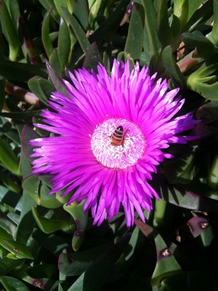 flower bee - webversion.jpg